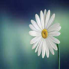 Muliya thimmappayya ( ಮುಳಿಯ ತಿಮ್ಮಪ್ಪಯ್ಯ ...